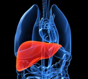 highlighted-liver-in-human-body